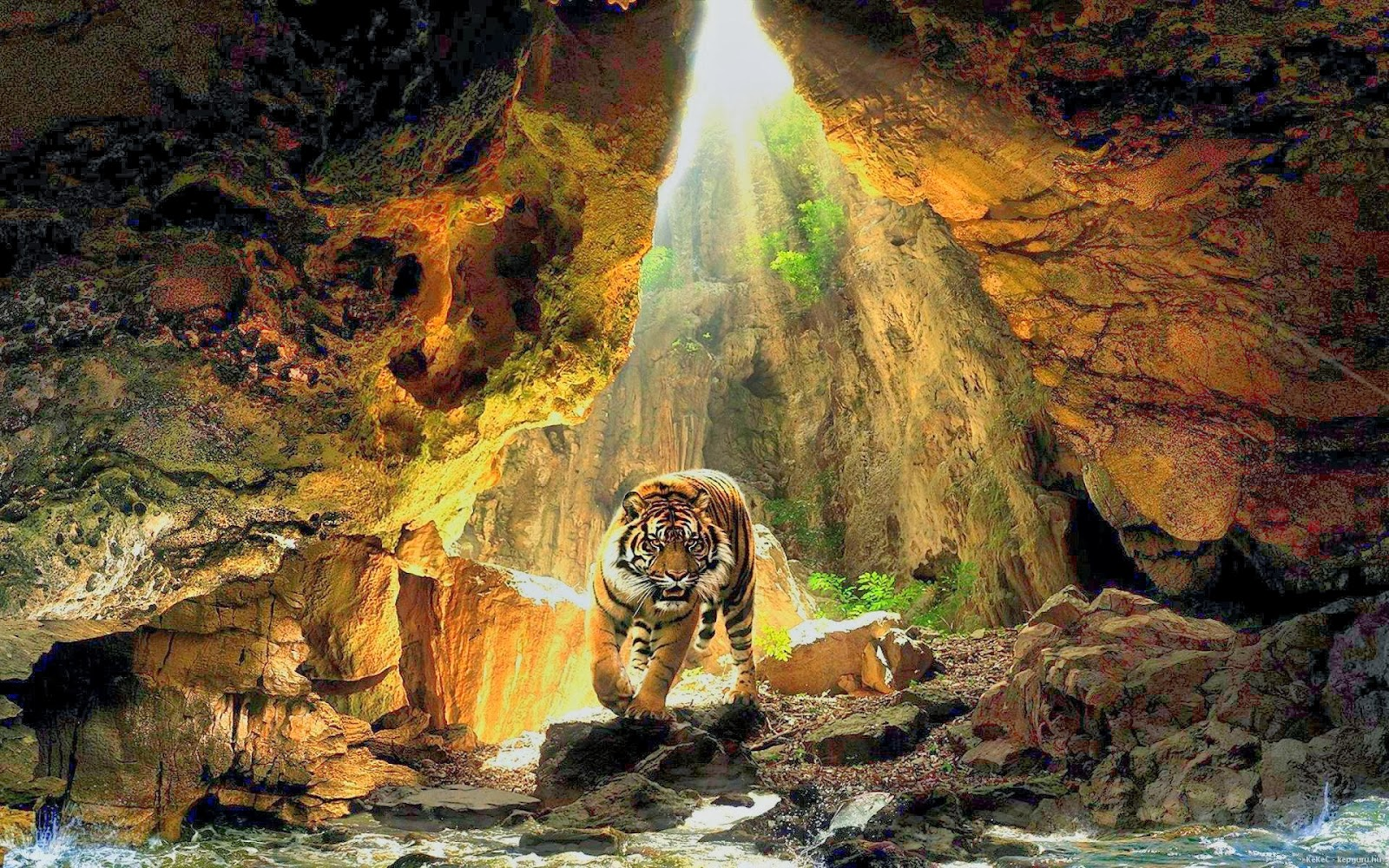 desktop hd wallpapers free downloads: bengal tiger hd wallpapers