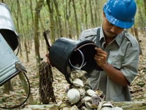 PT Perkebunan Nusantara V (Persero)
