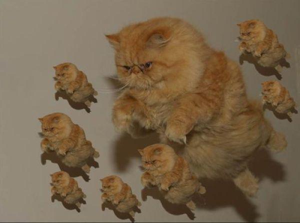 Gatos estranhos voando