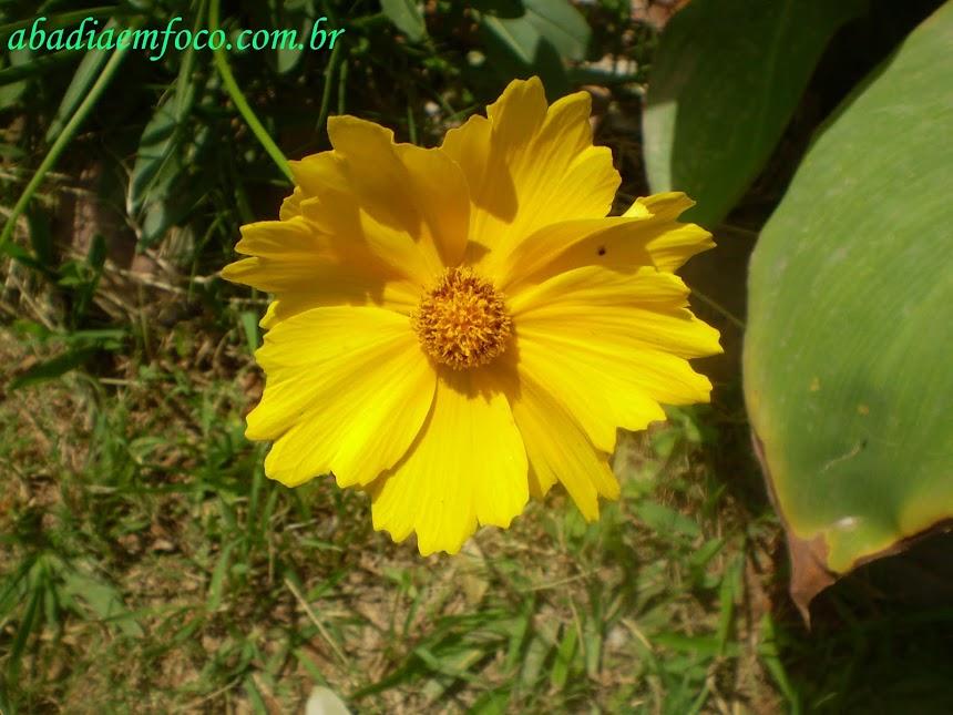 Flor em Ibitira City