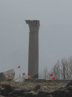 Red poppies by a column in ancient Pompeii