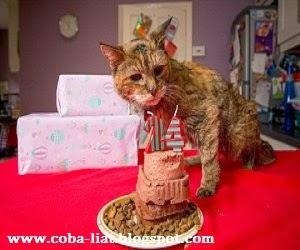 Kucing-tertua-didunia