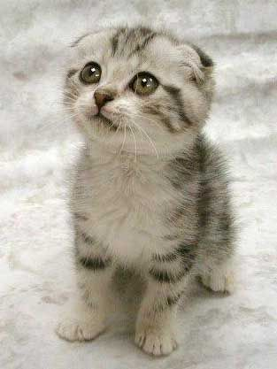 Cutepuppies  Kittens Wallpaper on Cute Kittens Cute Kittens Cute Kittens Cute Kittens