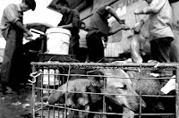 Zhejiang Jinhua Dog Meat