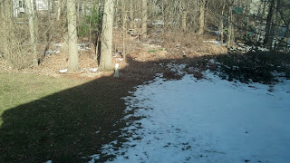 snow line recedes
