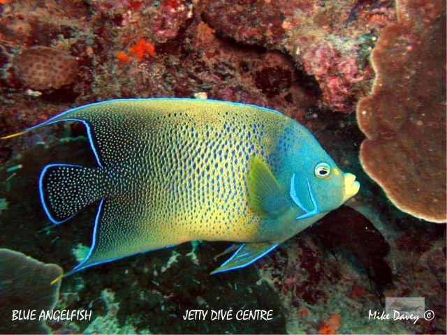 Rare marine species wild life for Rare saltwater fish
