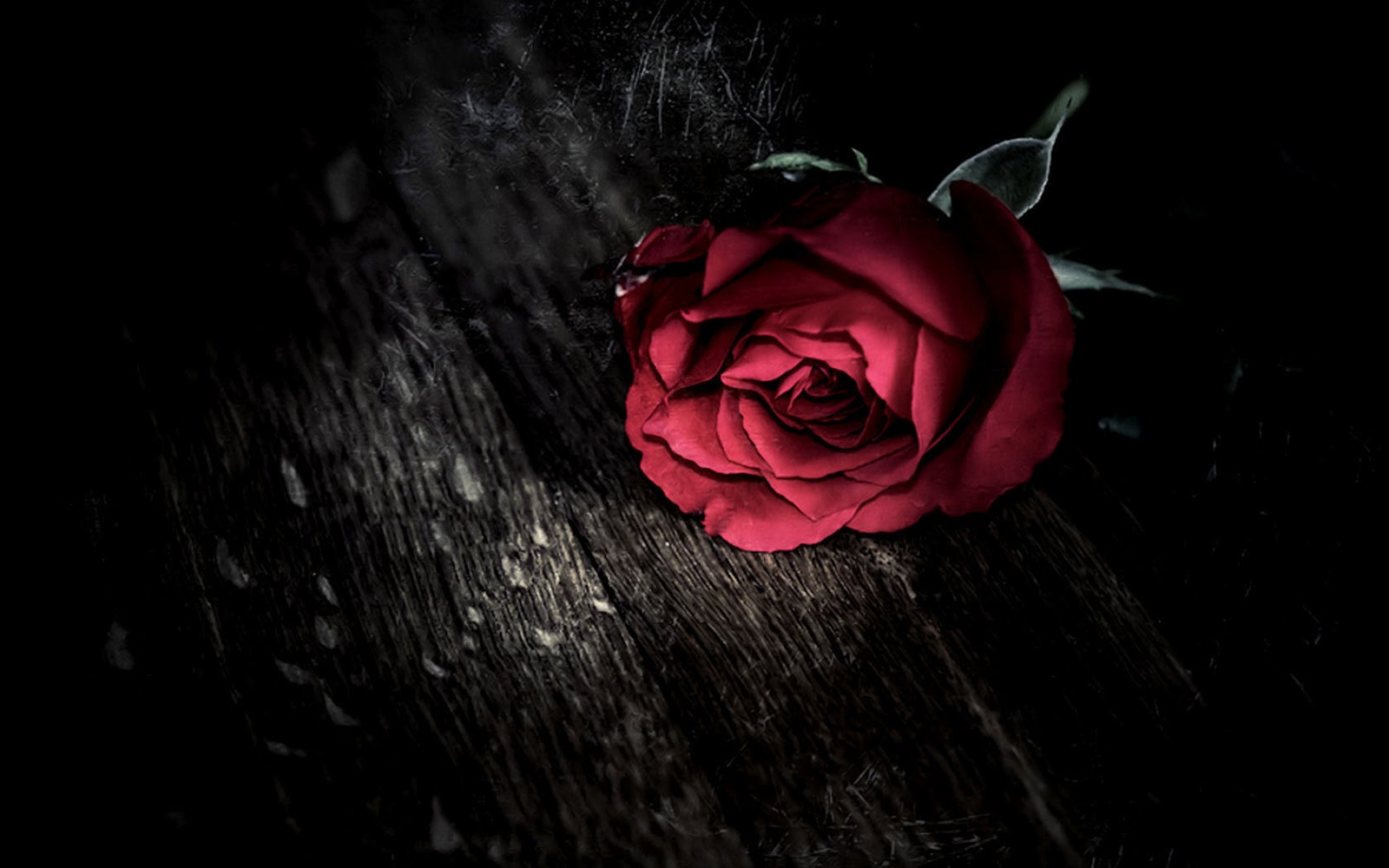 Red Rose Images HD Download
