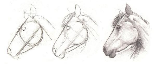 Favoloso corso di grafica e disegno per imparare a disegnare: Imparare a  ZW63