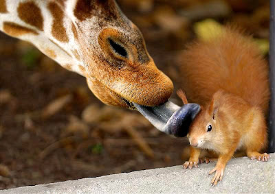 Animal Funny Picture