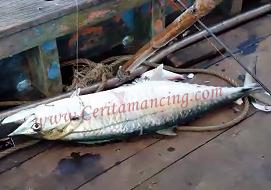 Gila Mancing Dapat Ikan Tenggiri Semangat