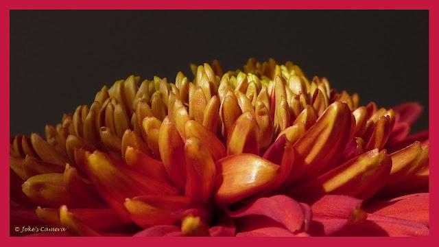 Joke 39 s camera chrysant bloem van goud for Eetbaar goud