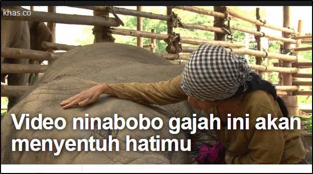 gajah thailand faa ninabobo tertidur
