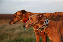 Nibs and Ambam- photo by Julia Sargeant