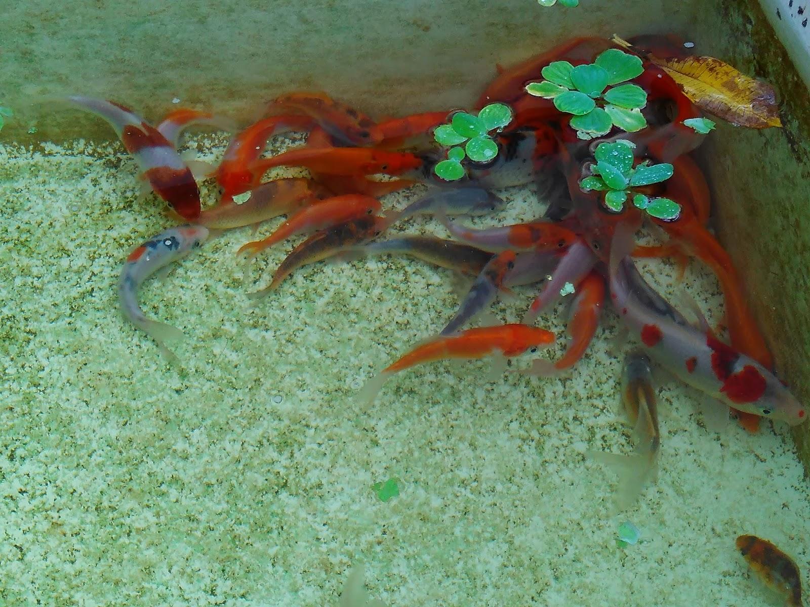 Jem's Aquascape: Fauna Aquascape