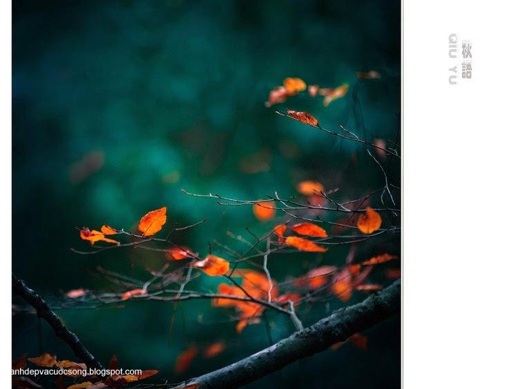 Chiếc lá mùa thu 9