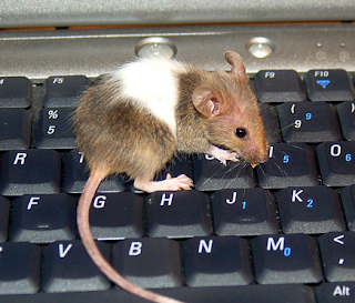 Computer Mouse, Pockafwye@Flickr