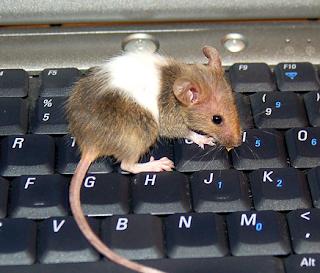 Computer Mouse, Pockafwye@Flickr