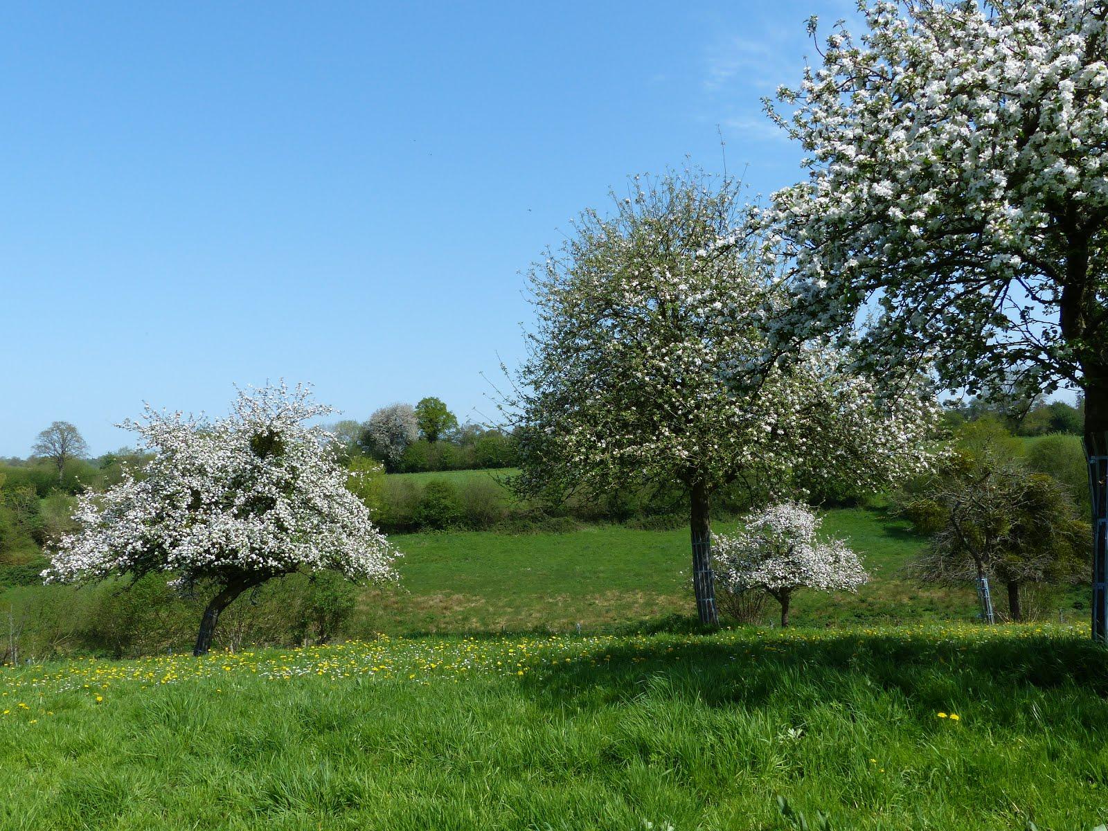 Le printemps en Normandie