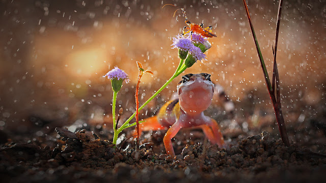 Gecko and insect on rainy day, Indonesia (© Shikhei Goh/Getty Images) 688