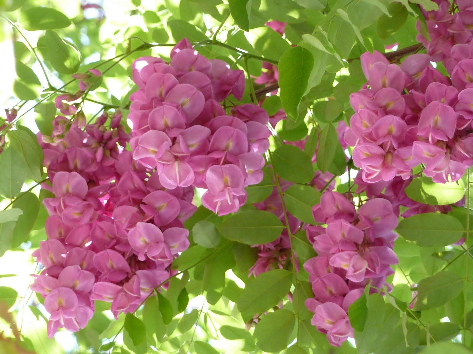galería de imágenes vivero de plantas de rosas - Imagenes De Plantas De Rosas