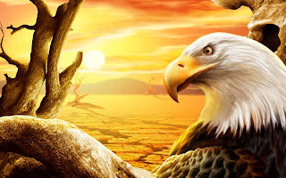 download nice eagle wide desktop wallpaper2013