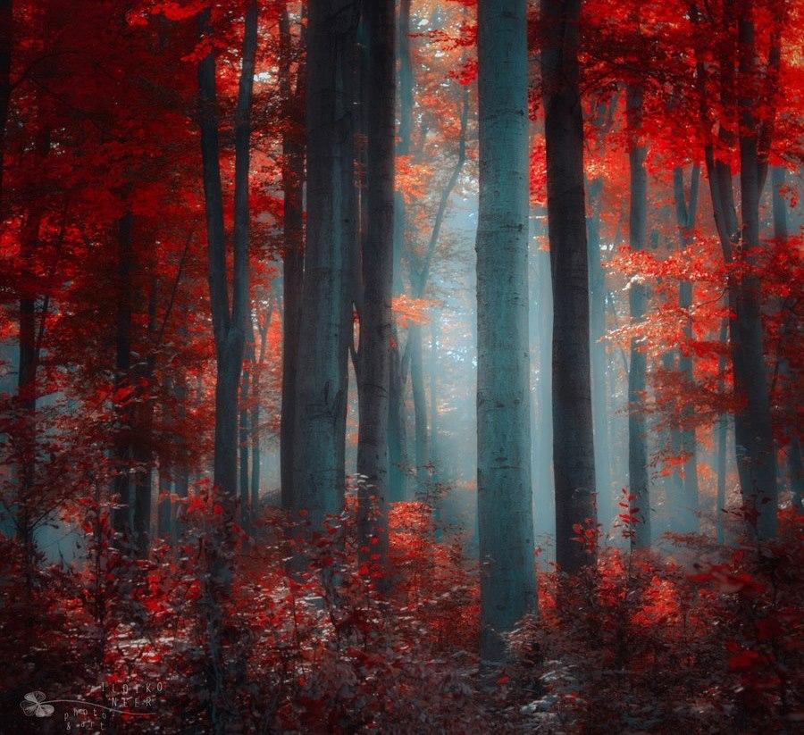 Fall Wallpaper Images Free: Download Free Desktop Wallpapers: Beautiful Autumn In
