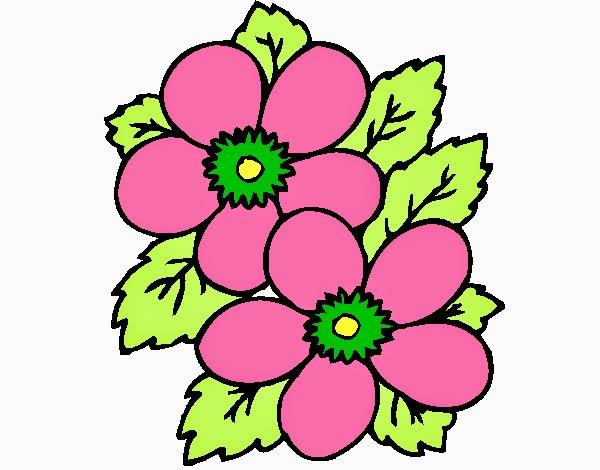 Fotos De Flores Coloridas Para Imprimir - 4 Aprenda os passos básicos do PhotoScape para deixar