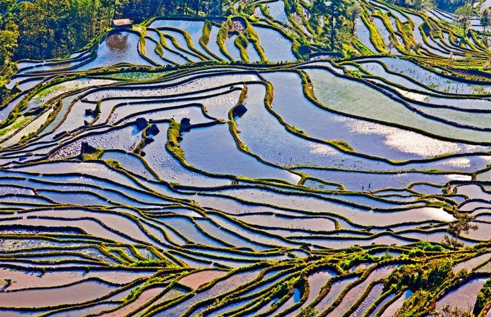 Honghe China  city pictures gallery : Lugares Fantásticos: Os incríveis terraços de Honghe Hani – China