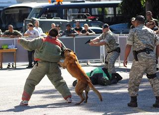 Cães dão show nas provas de abordagem policial e intervenção tática