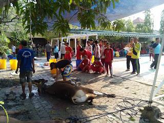Penyembelihan Hewan Kurban SMAN 11 Surabaya