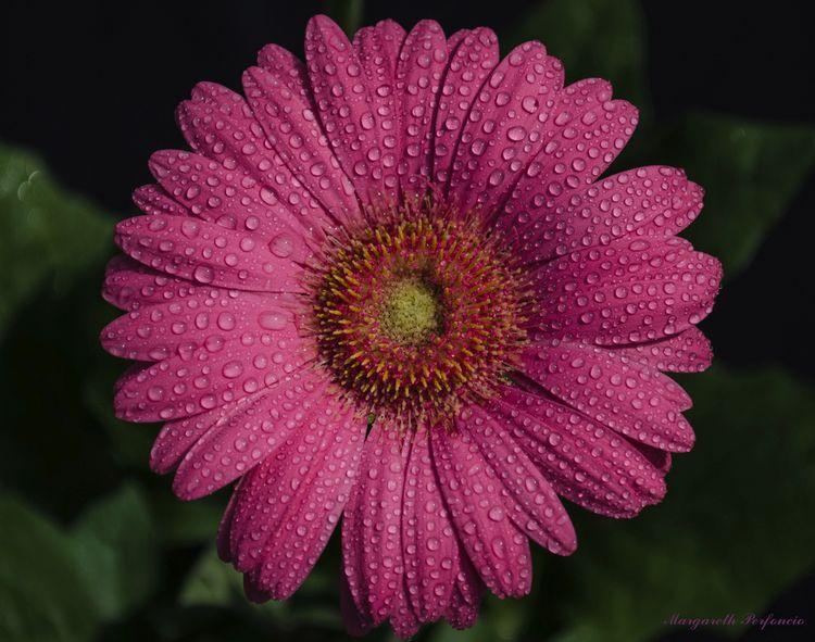 Share - Fotos de rosas de colores ...