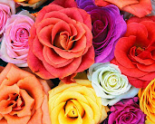 #8 Wonderful Flowers Rose Wallpaper