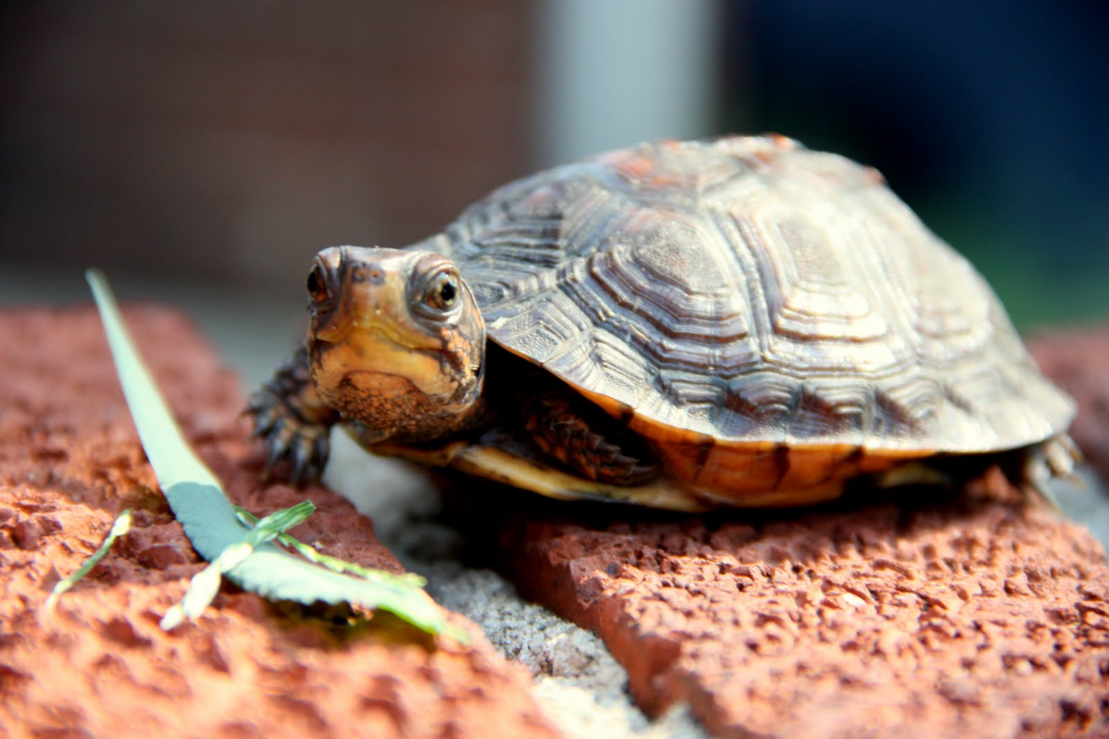 But last wednesday was one turtle s lucky day that was the day that i
