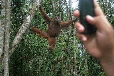 Indonesia Masih Kesulitan Kelola Hutan Hujan Alami