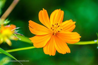 petal flower bud