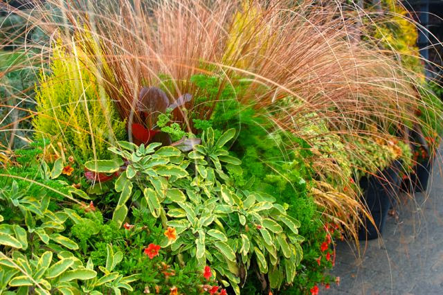 Toronto Gardens Cool designs with ornamental grasses