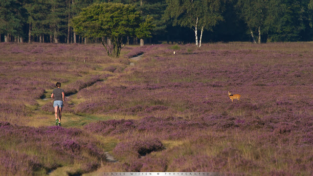 Runner and Roe Deer