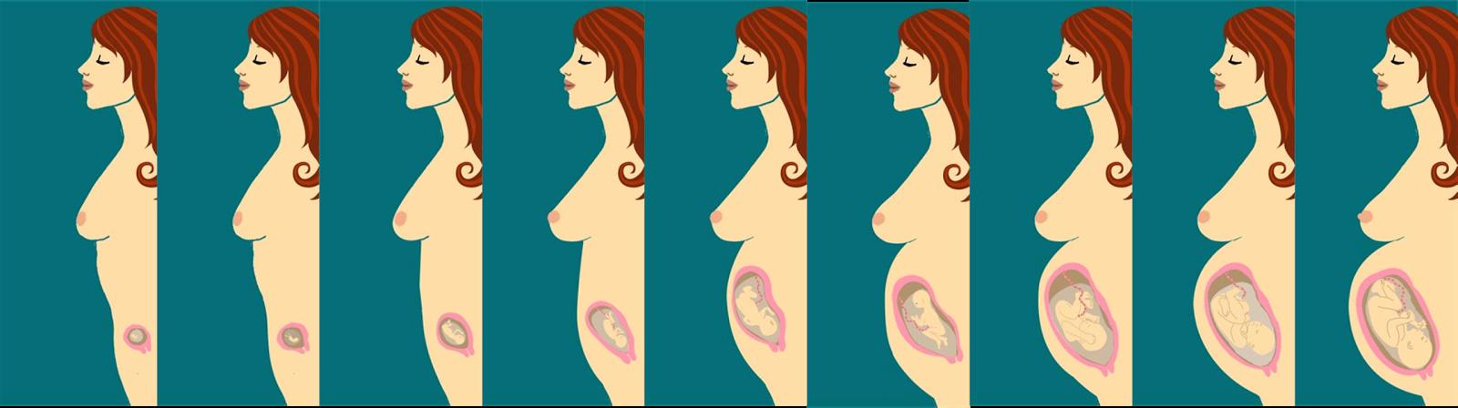 Embarazo acb - 1 mes de embarazo ...