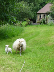 White Ouessant Ewe and Lamb