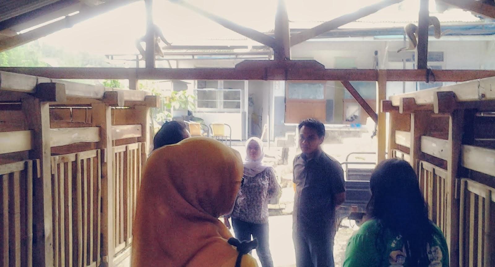 Kunjungan ke Peternakan Kambing PE tgl 30 September 2013