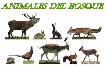 imagenes de animales que viven en el bosque - Los 20 animales más fascinantes de África Mediaset