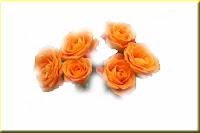 arti_mawar_oranye1502