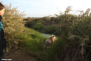 Fotografia do meu filho e Pasto Australiano no Estuário do Tejo