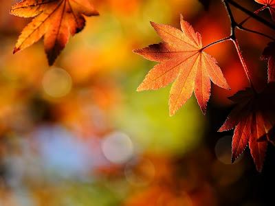 Autumn Season Standard Resolution Wallpaper 27