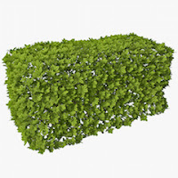 Picture of a green box hedge
