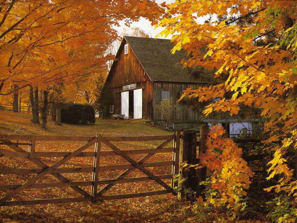 http://2.bp.blogspot.com/-W5tqa5qVrPw/Tm0bY5YvW-I/AAAAAAAAE-8/n4N2qEUDlh0/s1600/free+autumn+wallpapers-3.jpg