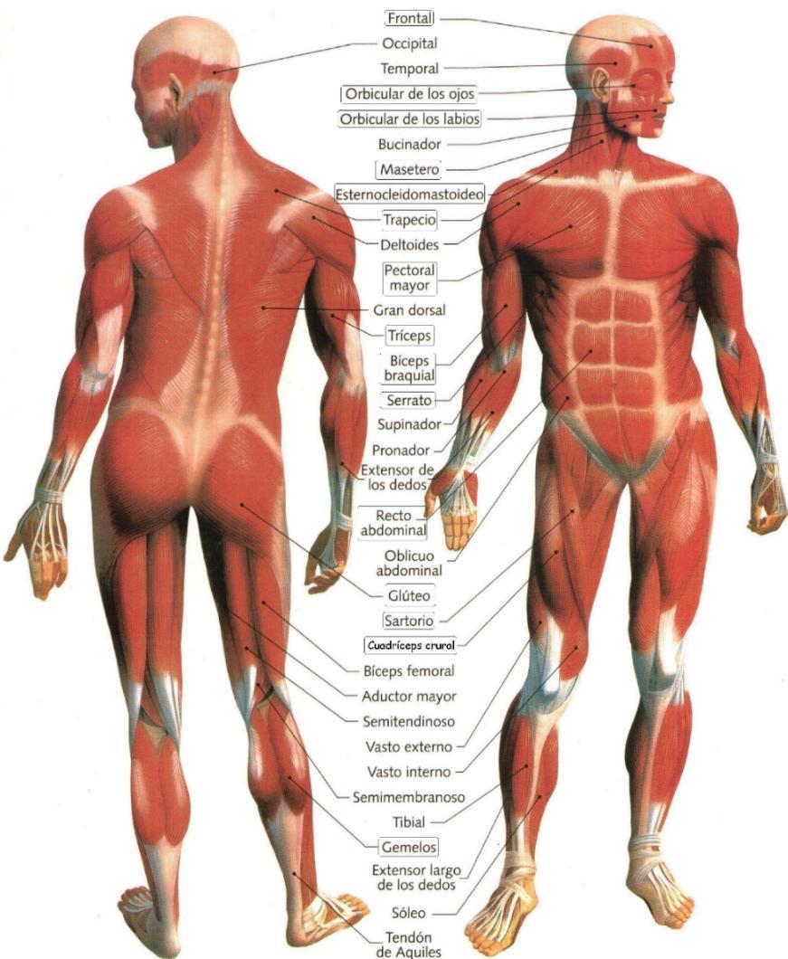 Educaciòn en Lìnea: Unidad de aprendizaje: Movimientos del cuerpo