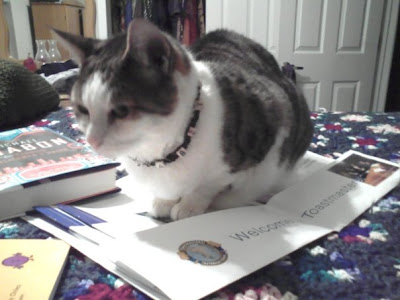 Cat on Toastmasters packet