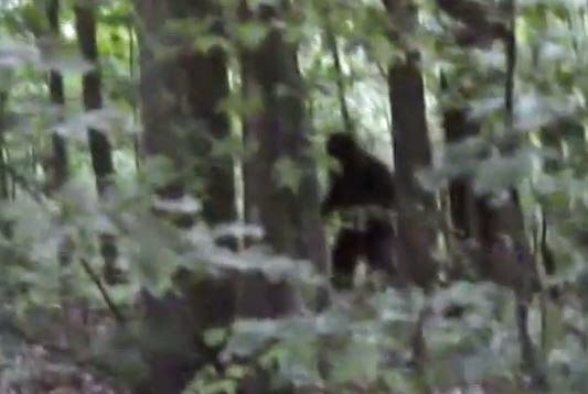 Video Revisited: Guy Chases Bigfoot in the Woods