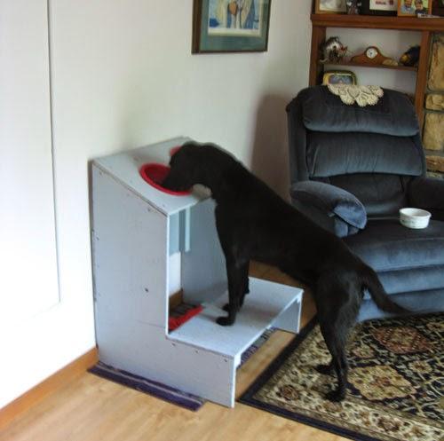 comedor elevado para cães